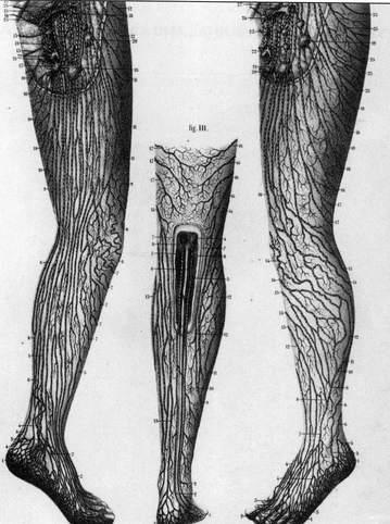 リンパ下肢-.jpg