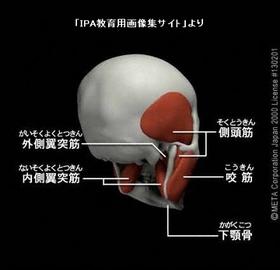顎関節症5.jpg