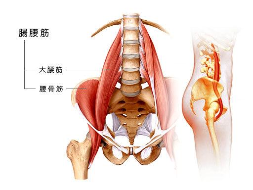「腸腰筋 フリー」の画像検索結果