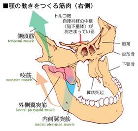 顎関節症3.jpg